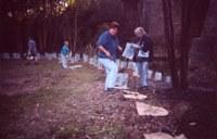 Rehabilitation of riparian areas along Swamp Creek in Abermain