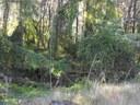 Nepean River Restoration