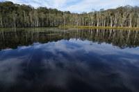 Urunga Coastal Freshwater Wetlands Rehabilitation Program - stage one