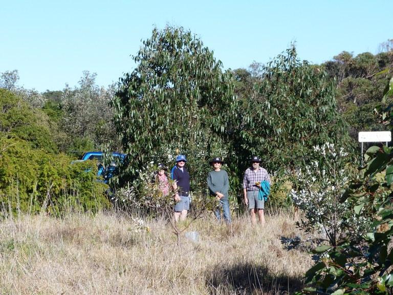 Baragoot Swamp car park planting 2009/2013