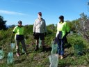 Working with Wilderness Coast Weeds Project
