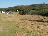 Baragoot Swamp car park planting