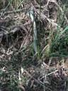Blady Grass web.JPG