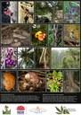 Big Scrub Lowland Rainforest Restoration
