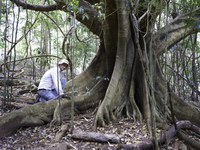 Rehabilitating critically endangered lowland subtropical rainforest - NSW Environmental Trust Restoration & Rehabilitation Program