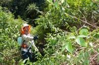 Rehabilitating/restoring endangered lowland subtropical rainforest - NSW Environmental Trust  Community Bush Regeneration Program