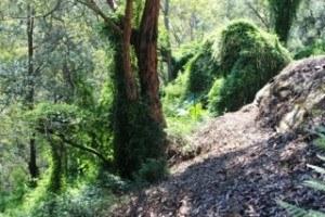 birdwood 3.jpg
