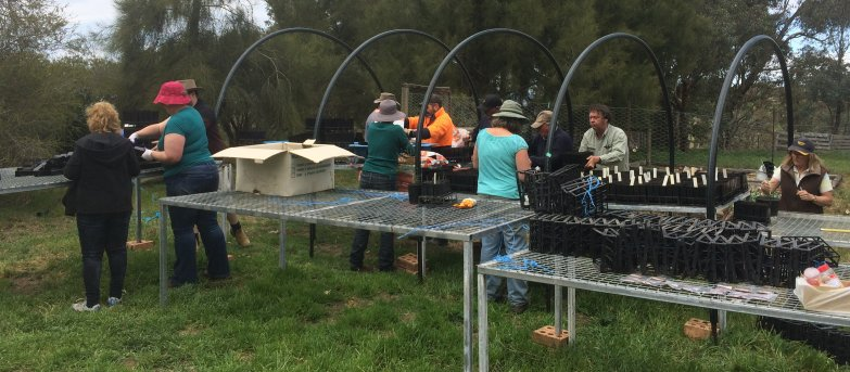 Landcare group planting seeds
