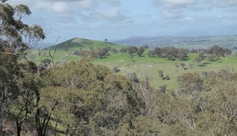 View from Bowning Hill
