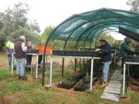 Seedling propagation