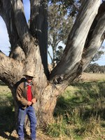 Lessons learnt on how to plan for dry times. By David Marsh, Boorowa grazier.