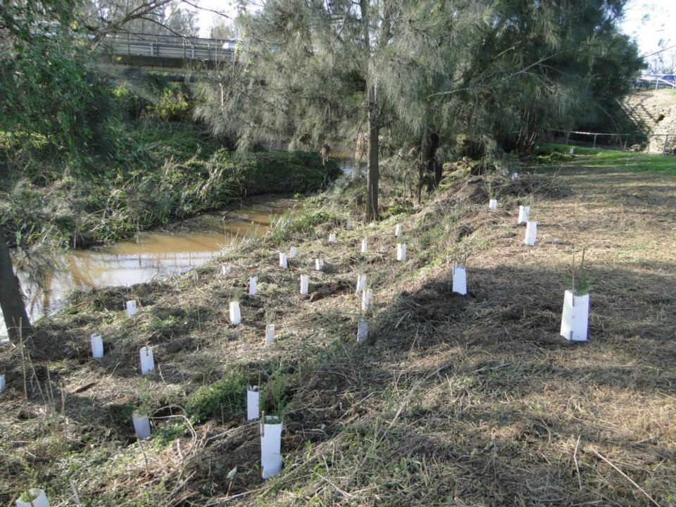 Anvil Creek Project.jpg