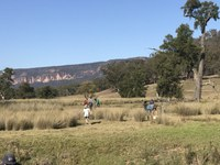Revegetation along Capertee River