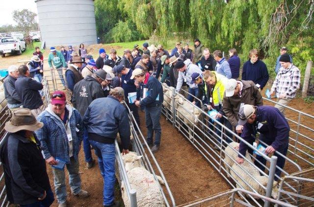 Best Wool/Best Lamb