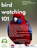 Birdwatching 101 at Macquarie Woods