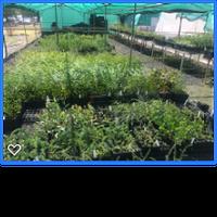 Central Tablelands Landcare Nursery