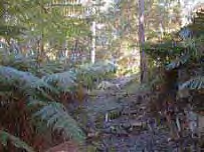 Chilworth Reserve.png