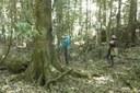 Billys Creek forest