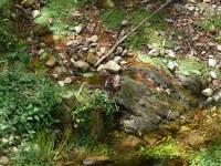 spring_yellowbank.jpg