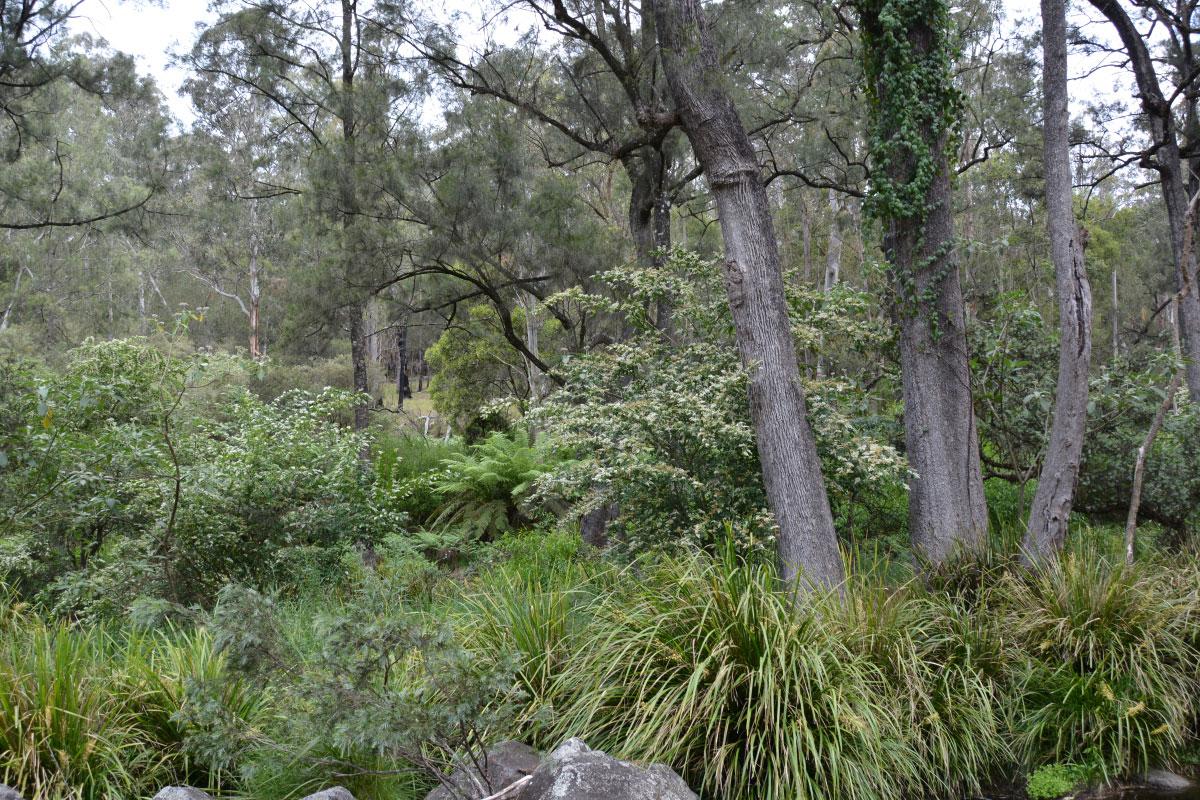 tree fern1
