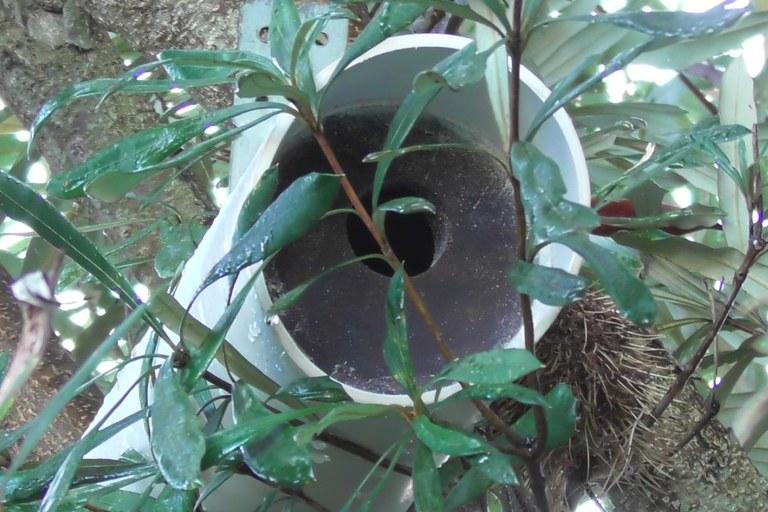 nestbox3.jpg