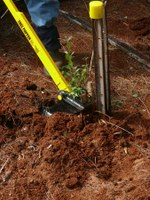 Tree Poppers for privet removal