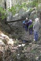 Rainforest ID Site Visits