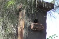 Wildlife Habitat Shelters