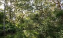 The-Bushcare-site-a-piece-of-remnant-Blue-Gum-High-Forest.jpg