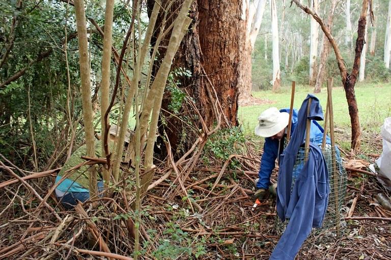 Edna Hunt Sanctuary Bushcare 1.JPG