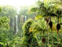 Wompoo Gorge Lowland Rainforest Corridor Restoration 2012 – 2015