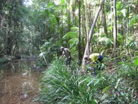 Yarrawarra Lowland Rainforest Restoration at Sherwood Nature Reserve Protecting Our Places Program 2013 – 2015 Yarrawarra Aboriginal Coorporation EnviTE Administrator