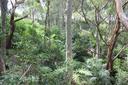 Fern Creek Gully Landcare.png
