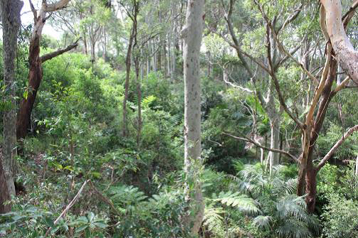 Fern Creek Gully Landcare.png