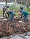 Replanting after Marysville fires_Vic