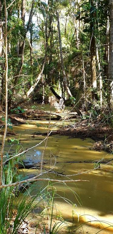 Forest photo 1.jpg