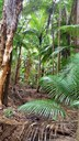 Forest photo 5.jpeg