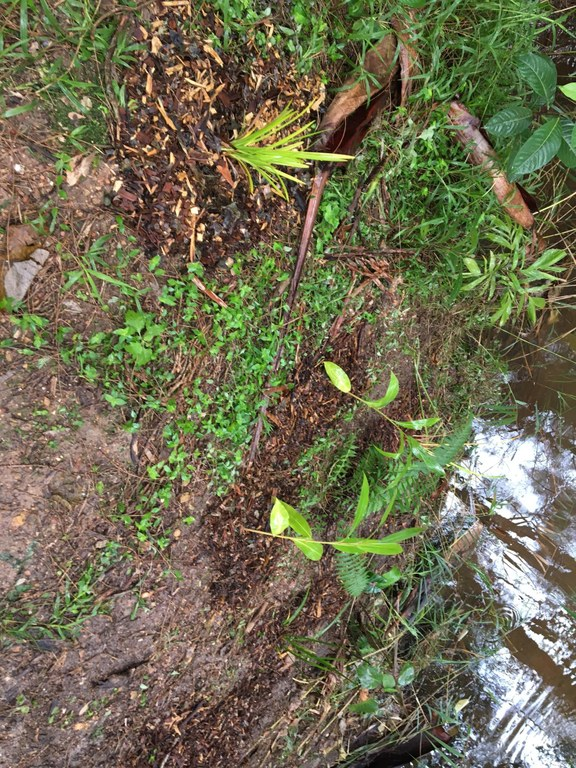 After planting - site 1 photo 2