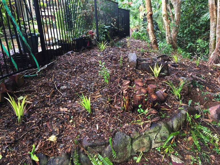 After planting - site 5