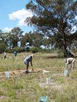 Friends of Burrendong Arboretum : Active Members Needed
