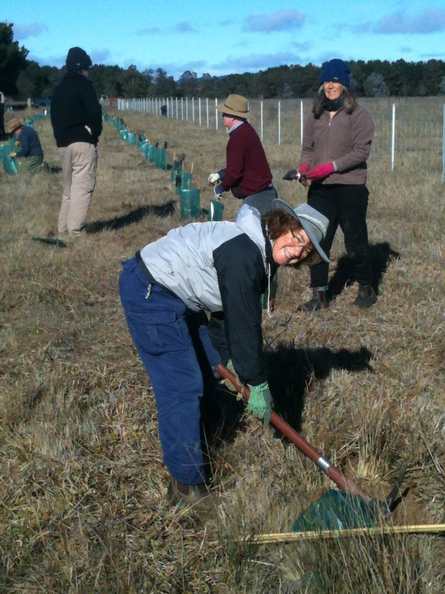 Bungendore planting