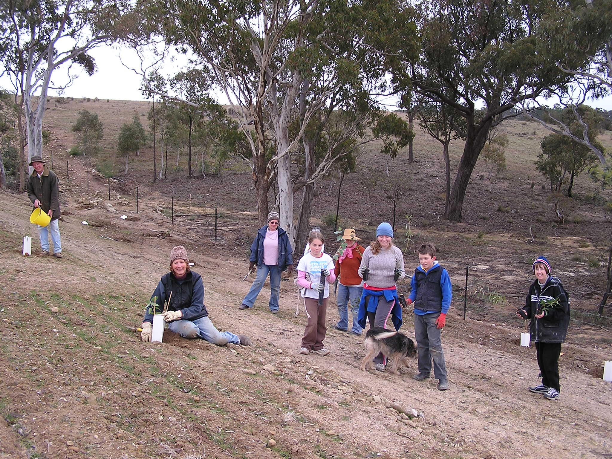 Birchmans Grove  planting, 2008