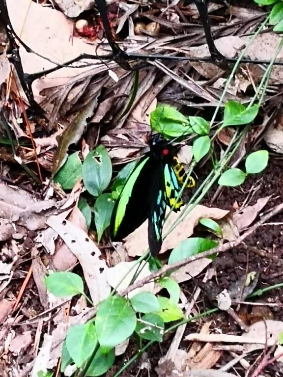 Birdview Butterfly 2021