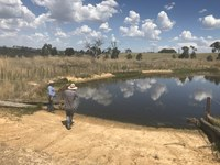 Managing our farm dams to maximise livestock performance and maintain biodiversity