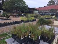 The Habitat community native plant nursery and food garden working bee