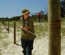 Byron Bay  Fencing and Planting Foredunes
