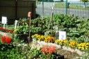 Our beautiful community garden