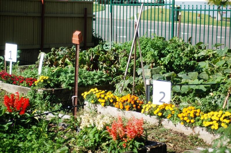 Our beautiful community garden