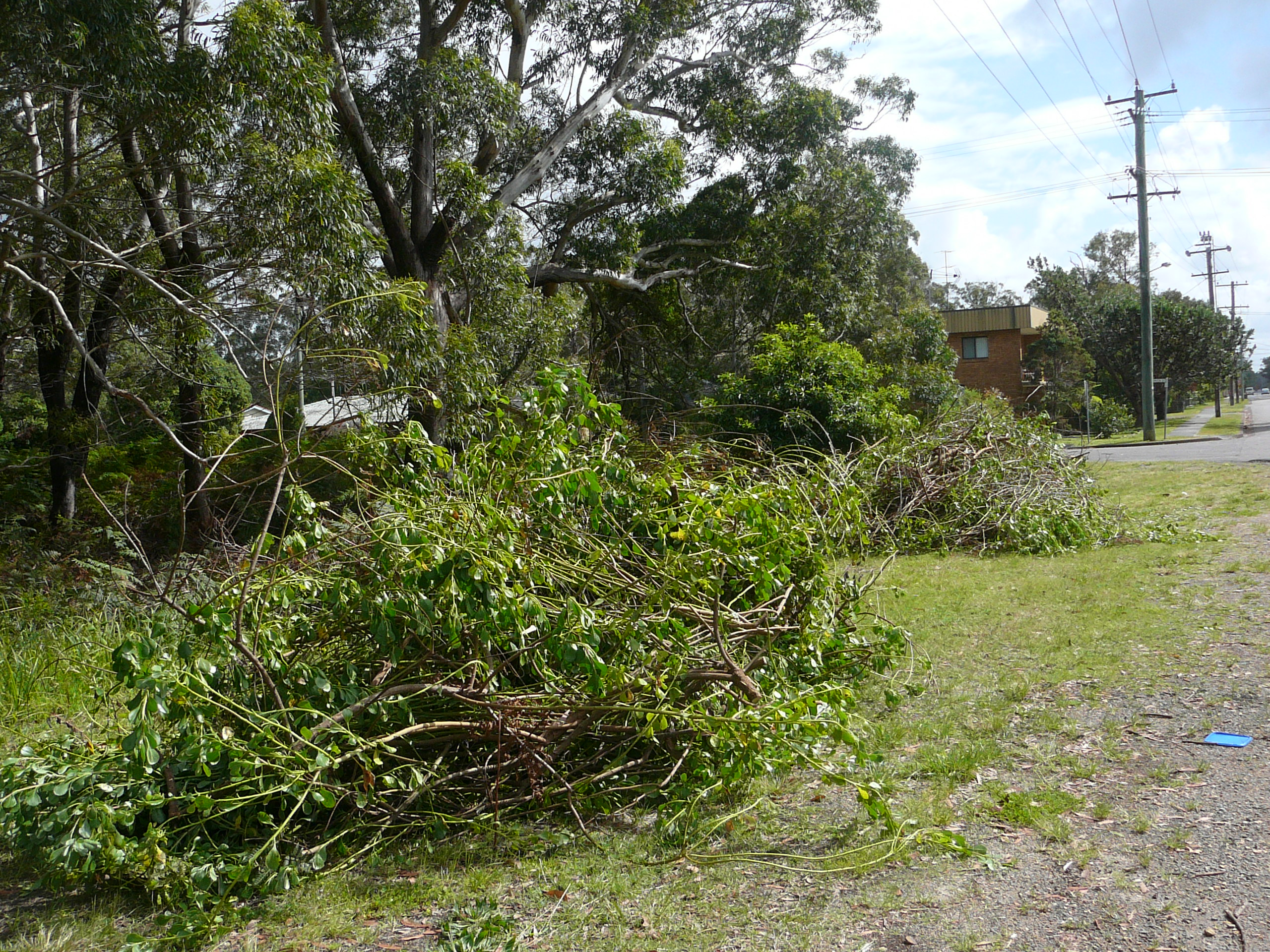 Bitou and rubbish galore gone forever from the bush edge of Hawks Nest Oval