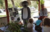 Ken the Koala